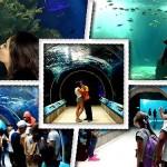 Conoce el Acuario del Zoológico Guadalajara